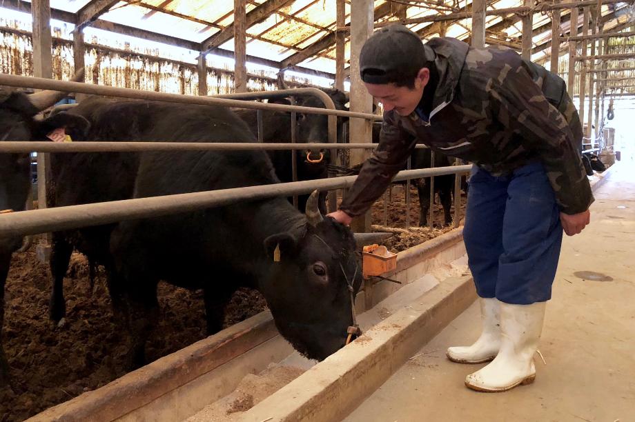 福岡県内産の良質な飼料で育った安心・安全で美味しい和牛